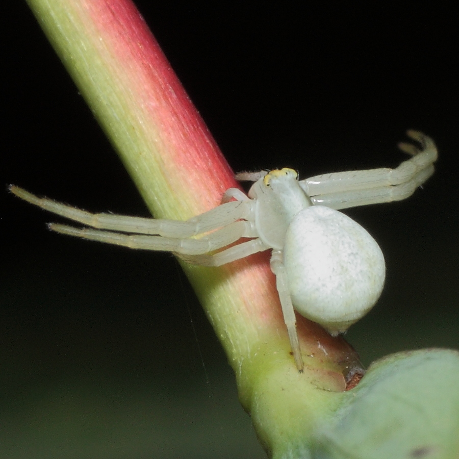 Flower crab spider 100 40d 07773 view full size bookmark and share flower crab spider mightylinksfo