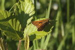 large-skipper-sp90-6D0901