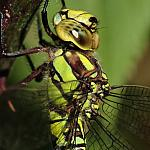 Dragonfly - Tamron SP 180mm - 100-40d-09183